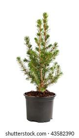 Christmas decorative tree isolated on white background