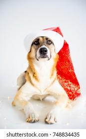 Christmas with a dog
