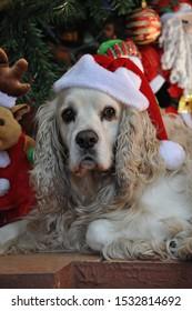 Christmas dog like the grinch