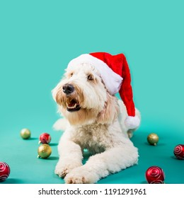 Christmas dog on Colored Background