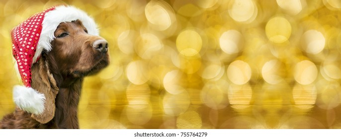 Christmas dog with Santa Claus hat - greeting card, banner idea