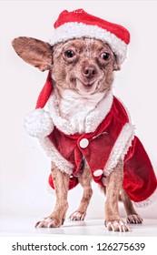 christmas dog smile