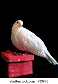 Christmas Dove Red Gift