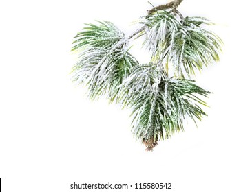 Christmas evergreen spruce tree with fresh snow isolated