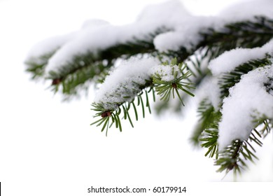 Christmas evergreen spruce tree with fresh snow on white