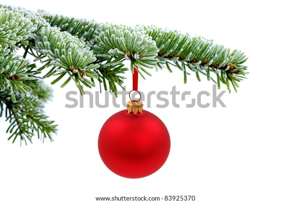 Christmas evergreen spruce tree and red glass ball