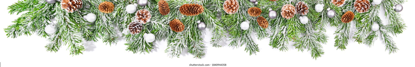 Christmas Fir Brnaches with Snow  isolated on white Background - Super Wide Panorama