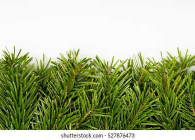 Christmas fir tree branches border. Decorative holiday design element.
