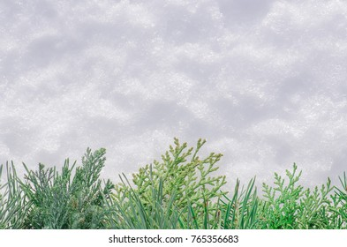 Christmas fir tree frame background. Fir branch on the background of natural snow.