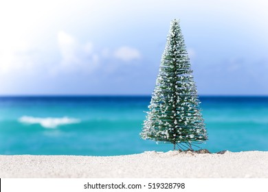 Christmas fir tree on sandy beach. New year celebration