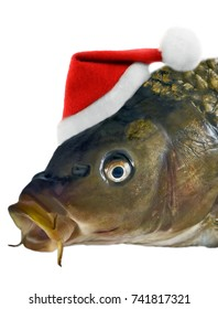 Christmas fish in Santa red hat head carp isolated on white background