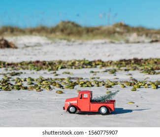 Christmas in Florida concept. A red pickup truck carries a Christmas tree past mangrove sea pods and dunes on New Smyrna Beach.