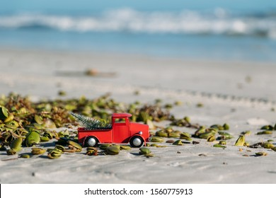 Christmas in Florida concept. A toy pickup truck hauls a xmas tree past mangrove seed pods on New Smyrna Beach.