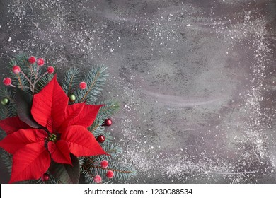 Christmas flower poinsettia and decorated fir tree twigs on dark textured background with snow, copy-space