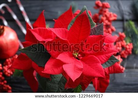 Christmas Flower Poinsettia On Wooden Table Stock Photo Edit Now