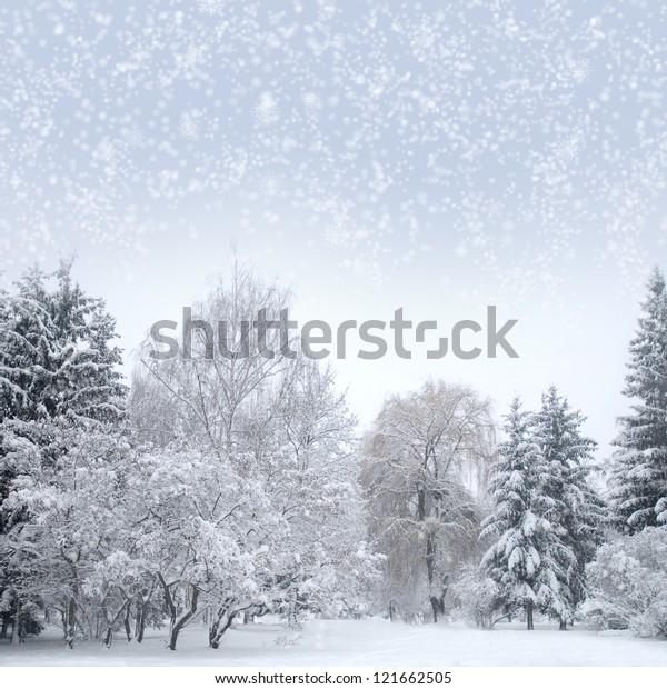 Christmas forest with snow, sky, fog