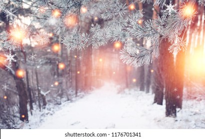Christmas forest. Winter nature with shining magic snowflakes. Wonderful winter woodland. Xmas background. Frosty and snowy forest
