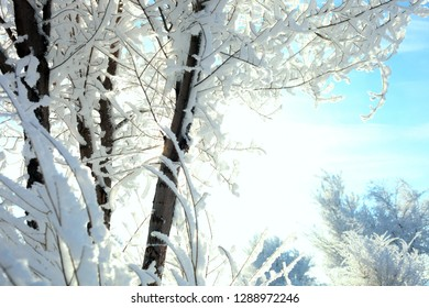 christmas, frost on trees, winter landscape