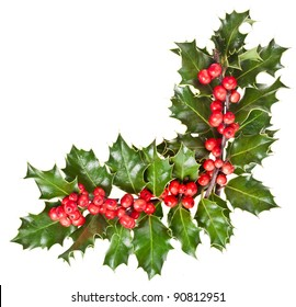 christmas garland of european holly Ilex corner border close up isolated on white