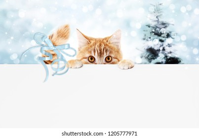 christmas ginger cat gift card with tree and blue ribbon bow, copy space template