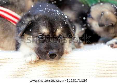 Christmas Group Cute Little Puppies On Stock Photo Edit Now