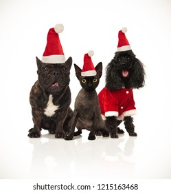 christmas group of three santa cats and dogs sitting on white background and panting