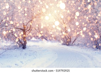 Christmas Holiday Background with color snowflakes. Trees  with hoarfrost backdrop.Winter sun shine through trees in park