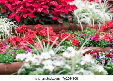 Christmas Holiday Flowers