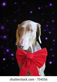 Christmas holiday snow dog