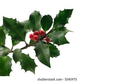 Christmas holly with berries isolated on white