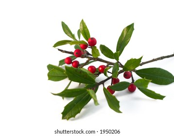 christmas holly isolated on white (natural)