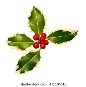 Christmas Holly Leaves and berries corner item for festive borders at christmastime.