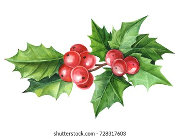 Christmas Holly Watercolor on isolated white background