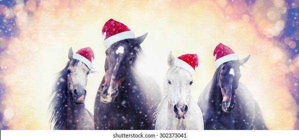 Christmas Horse Pictures.Christmas Horse Images Stock Photos Vectors Shutterstock