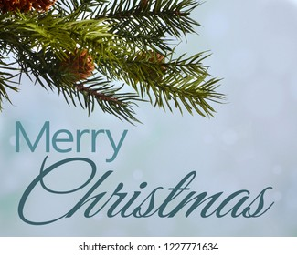 Christmas image of pine branch with small cones on blue tinted bokeh background. Merry Christmas text added