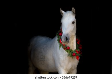 Christmas image of a white horse wearing a wreath and a bow on black background