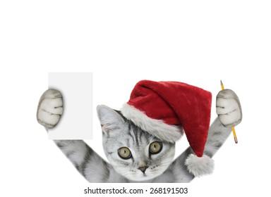 christmas kitten holding