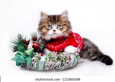 Christmas kitten wearing a sweater red