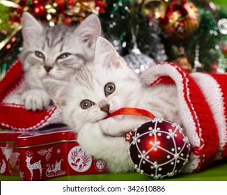 chatons noël