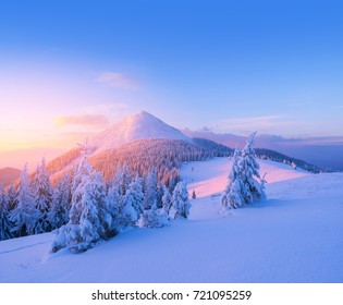 Christmas landscape with fir trees in the snow. Winter in the mountains. Fabulous views in the wild