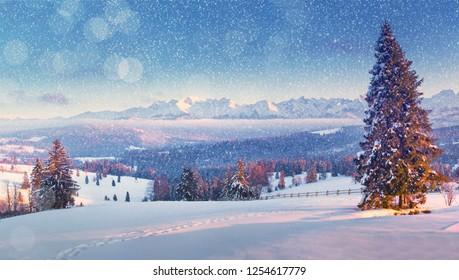 Christmas landscape. Christmas snowfall. Beautiful winter morning in mountains with snowfall. Winter nature.