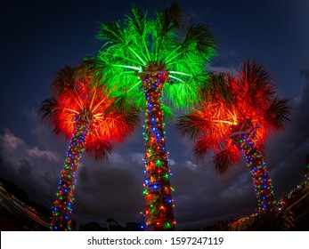 Christmas light decorationed palm tree in tropical Florida