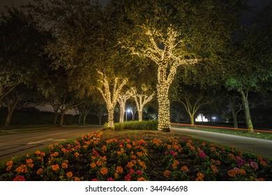 Christmas light decorations on trees at night