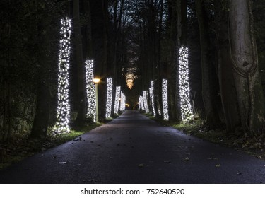 Christmas lights decorating trees in the forrest at Centre Parcs Longleat