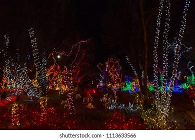 christmas lights on cactus