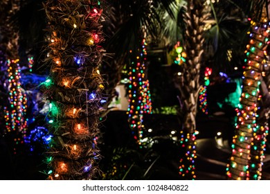 christmas lights on palm trees with bokeh christmas lights