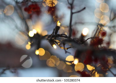 Christmas Lights on Tree