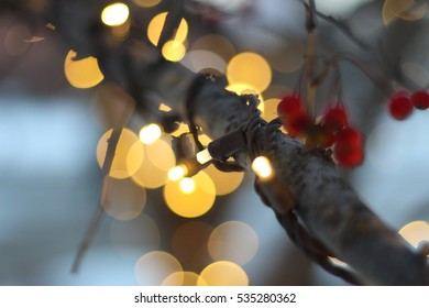 Christmas Lights on Tree with Berries