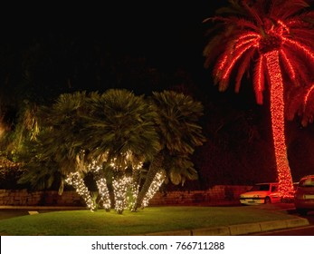 Christmas lights in the palms in red and white on Tenerife