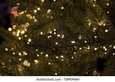 christmas lights in a pine tree